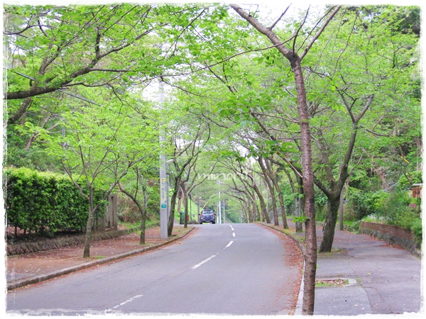 新緑の木々と道路