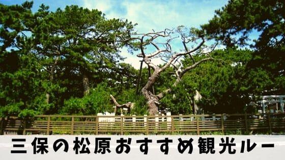 【三保の松原】おすすめの観光ルートを地元民が詳しく解説!