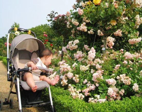バガテル公園のバラを触ろうとしている子供と女性