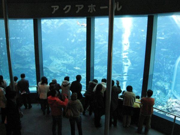 下田海中水族館の大水槽
