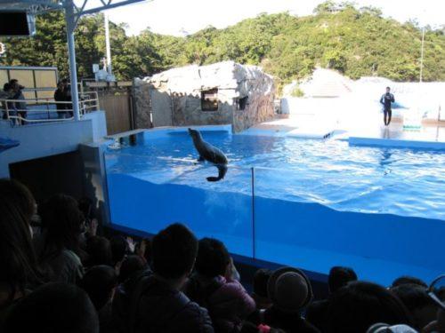 下田海中水族館のイルカ水槽に乗るアシカとそれを見る観客