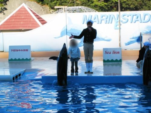 下田海中水族館のイルカ