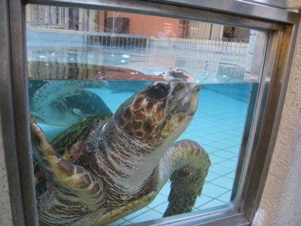 下田海中水族館のイルカや亀