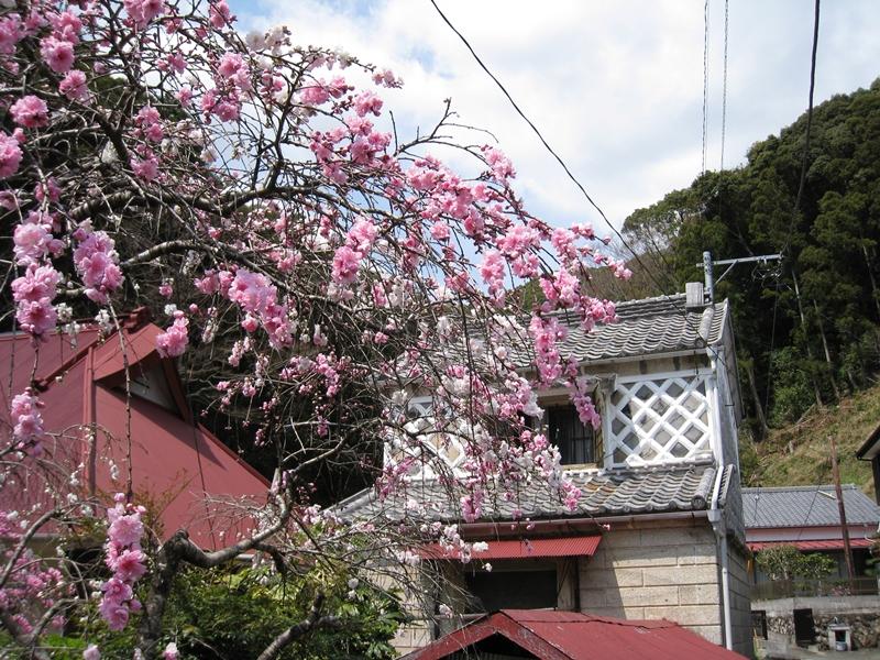 蓮台寺のしだれ桃と蔵