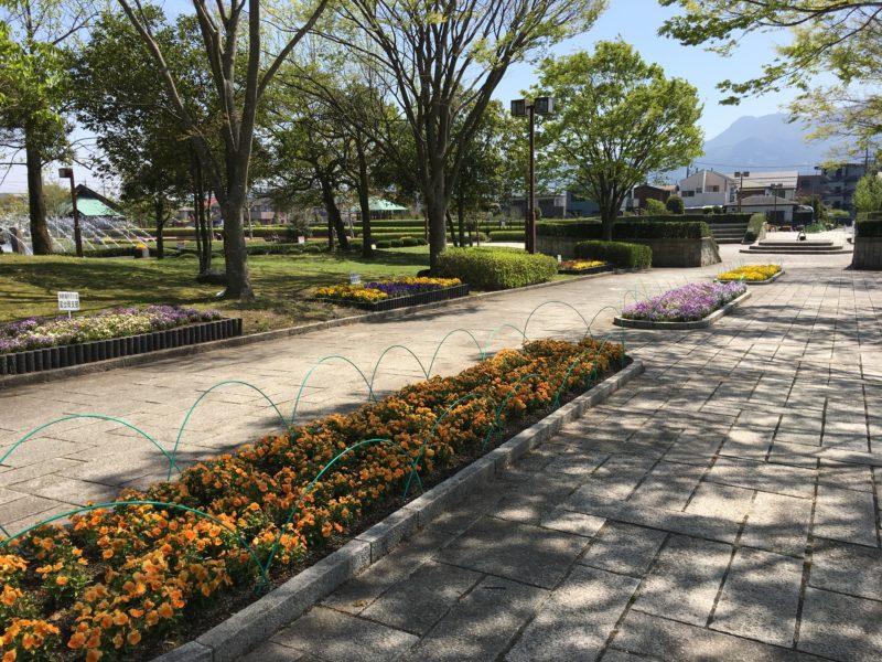 公園内の整備された歩道と植物