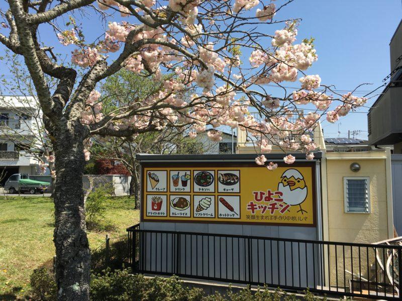 桜の木とひよこキッチンと書かれた看板