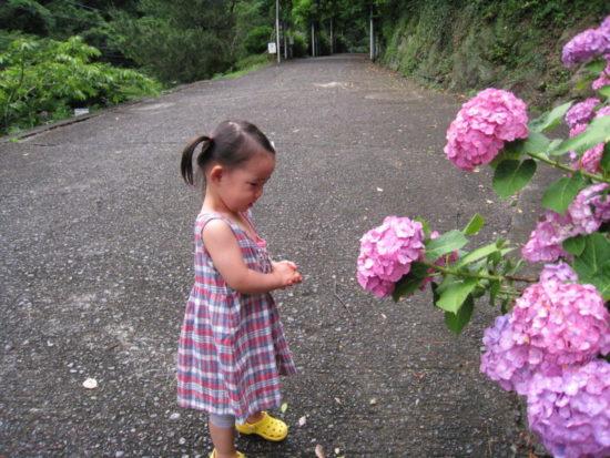 下田公園のピンクのあじさいと子供