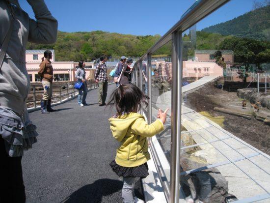 割引クーポンが使える伊豆アニマルキングダムでガラスに手をやる子供と通路に人々がいる