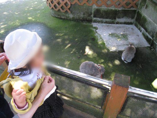 割引クーポンが使える伊豆アニマルキングダムでウサギ二匹を観る子供