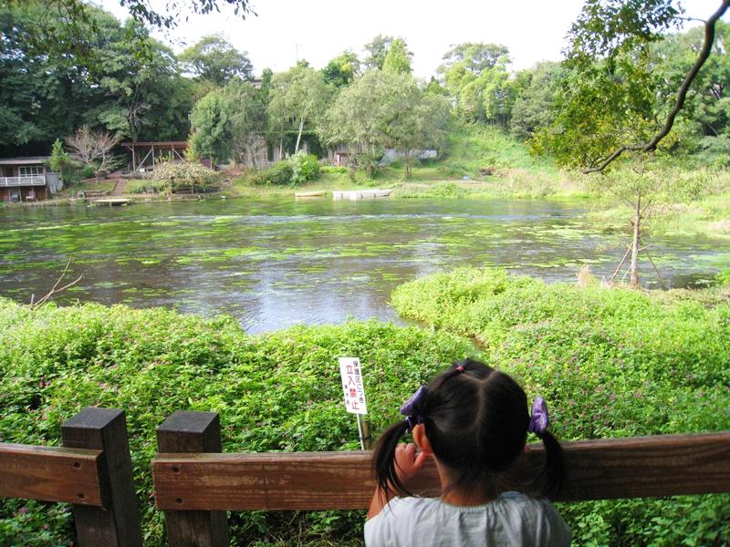 池を眺めている子供木々の緑もある