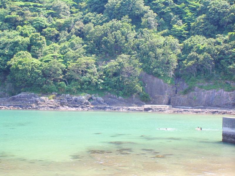 エメラルドグリーンの海と奥に森