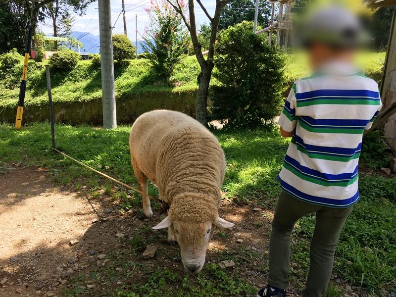 ロープにつながれた羊とそばに子供