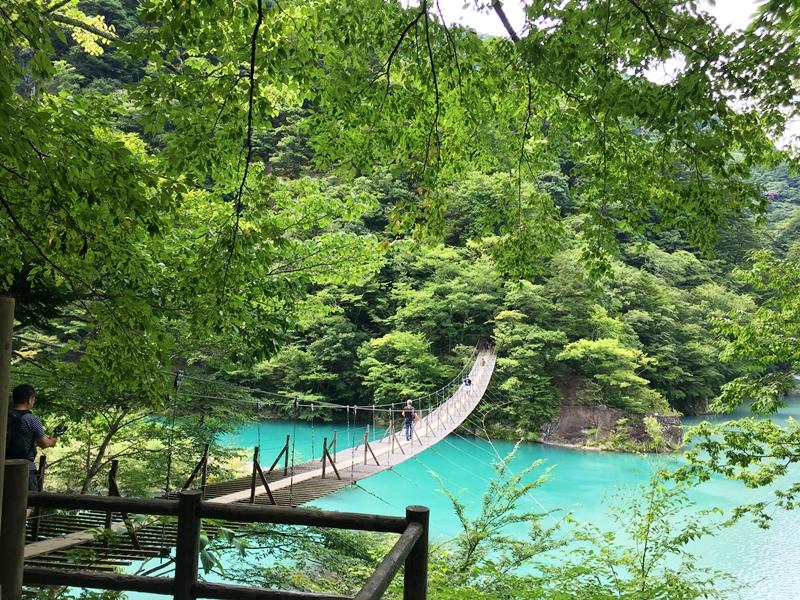 木々の中に吊り橋がある、下に緑色の水