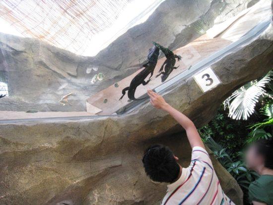熱川バナナワニ園のガラス張りの天井にワニが二匹いて、それを指さす人