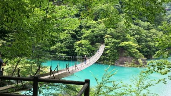 木々の緑の中に吊り橋、下に緑色の水