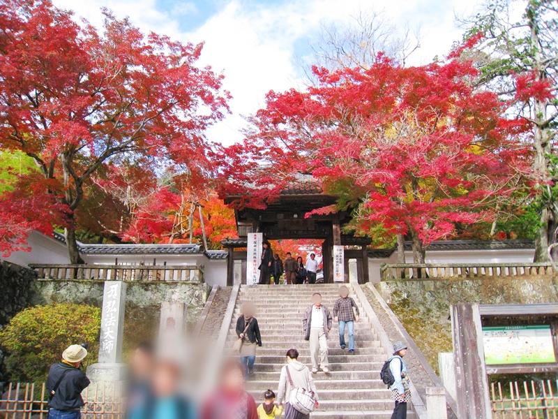 寺に続く階段を下りる人と紅葉