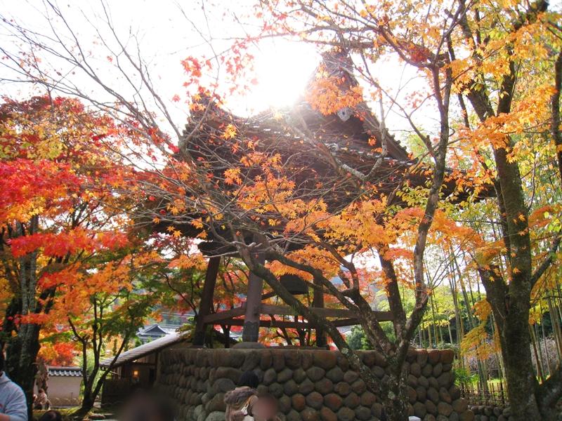 太陽に照らされる建物と紅葉