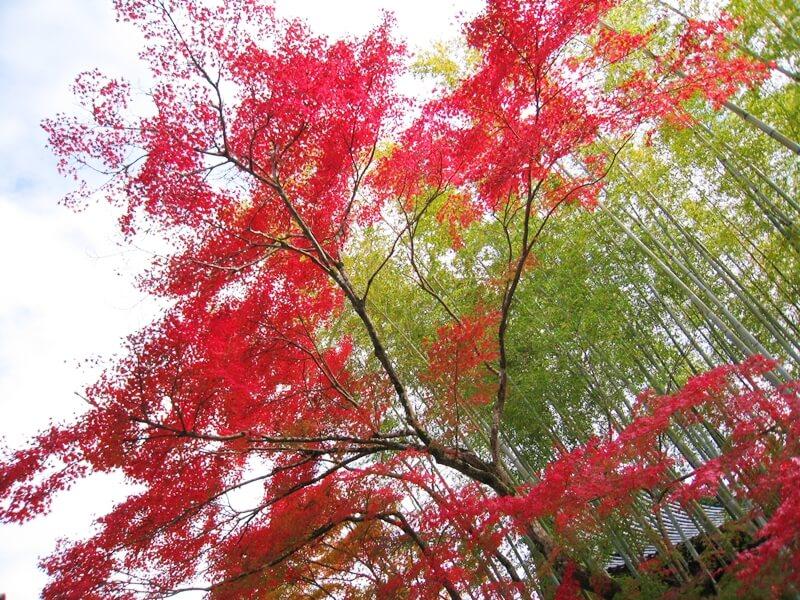 紅葉と竹林