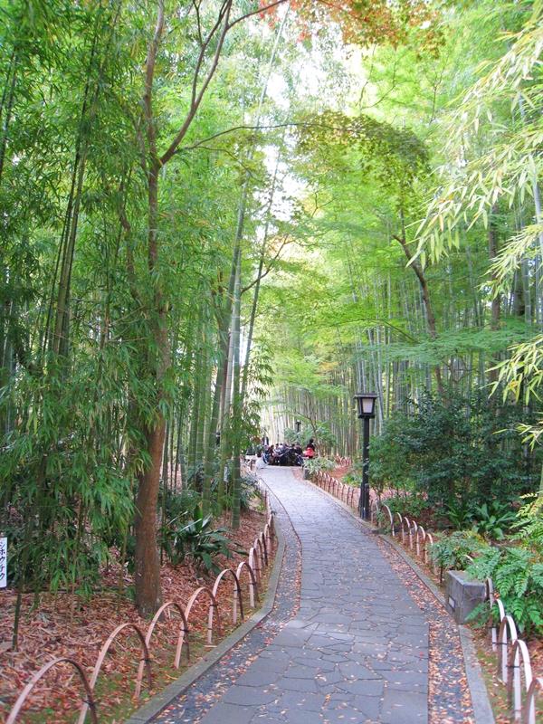 緑の竹林の間に道がある