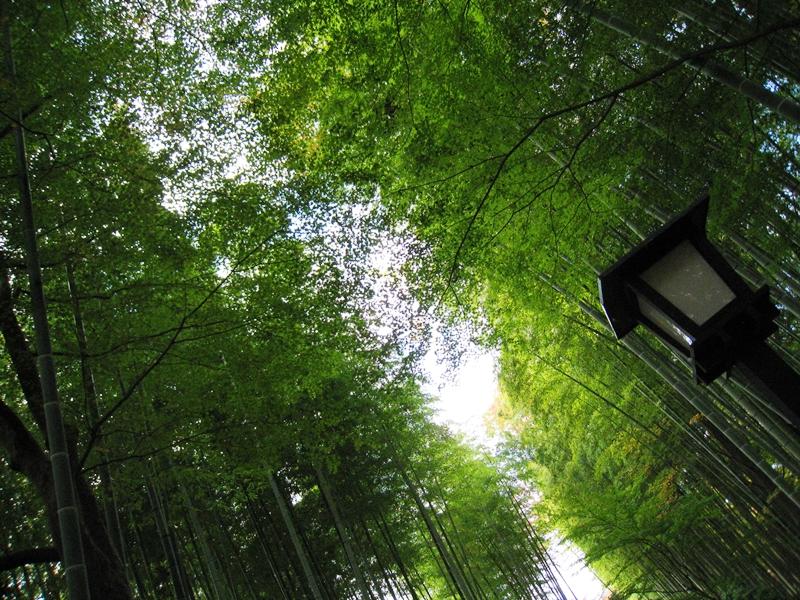 緑の竹林の間に空が見える