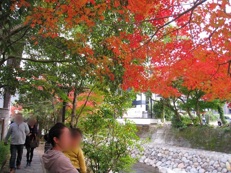 赤緑の紅葉を見る人と川