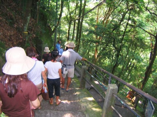 緑の中、浄蓮の滝までの階段を下りる人々