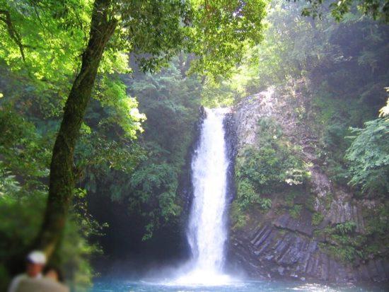 緑の木々の奥で、流れる浄蓮の滝